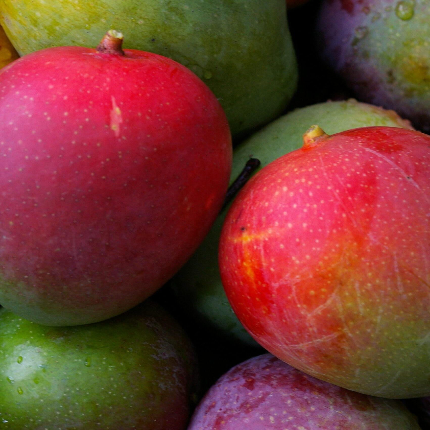 FruitPics 010